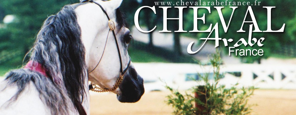 Cheval, Poney, Cheval Arabe, Equitation